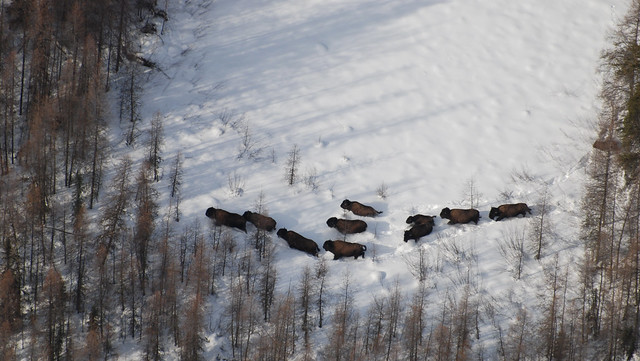 Collaboration to protect boreal forest