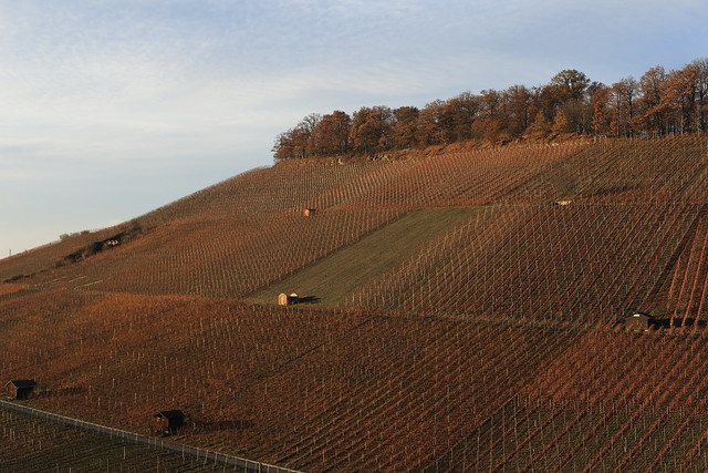 Vineyard@Weinsberg, Germany