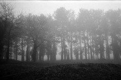 Mist in the wood - Photo of Gy-l'Évêque