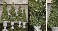 hive // cone + spiral boxwood topiary | fifty linden friday