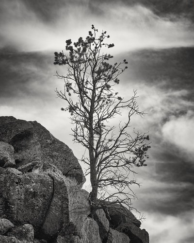 newmexico unitedstates us monochrome tree nature