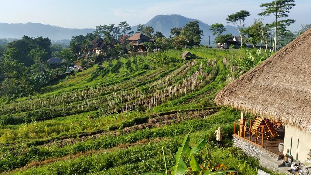 Sawah Indah Villa widok z restauracji