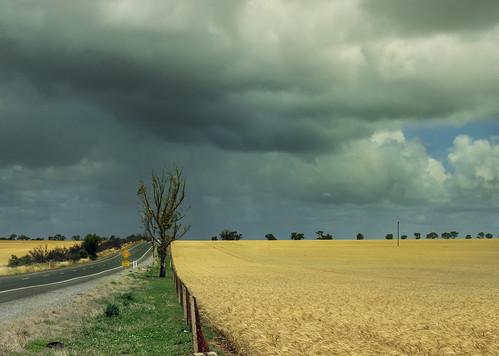 Tarlee Road3