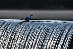dans l'air ou dans l'eau