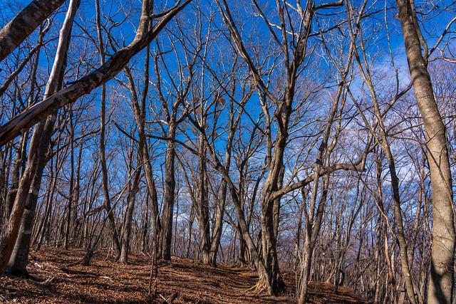 三頭山・奈良倉山を越えて牛ノ寝通り・・・穏やかな自然林の道を行く