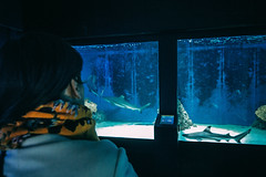 Women In The Aquarium