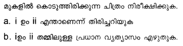 Plus Two Botany Model Question Papers Paper 5Q6.1