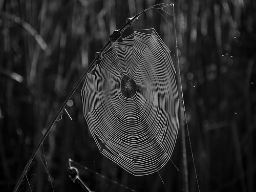 Web | by Ed Rosack