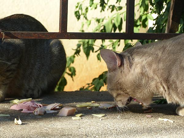 chat affamé