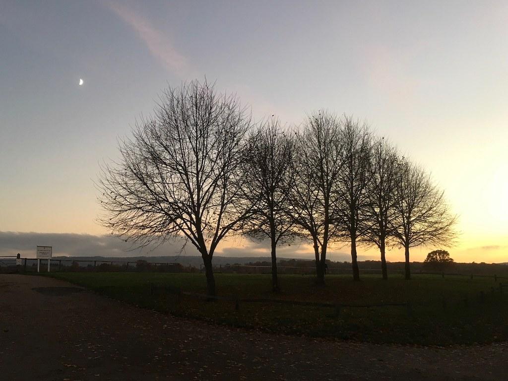 Dusk trees, Midhurst Haslemere to Midhurst via Henley walk