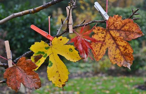 D'r zit in Drenthe nog veel blad aan de bomen !