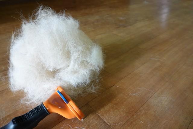 抜け毛対策のブラッシングでとれた犬の被毛