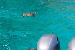 Na Pali boat Schildkröten Kauai, Hawaii