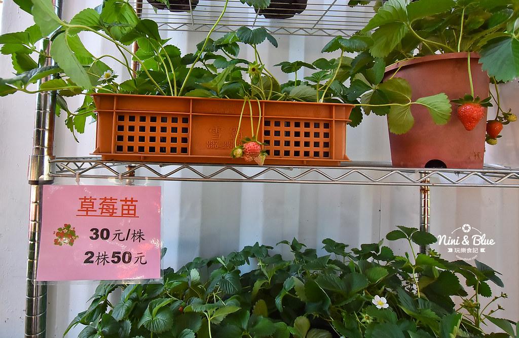 草莓世界.台中採草莓21