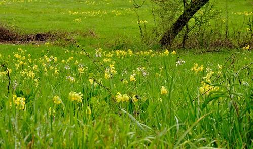 printemps-prairie_26249731572_o