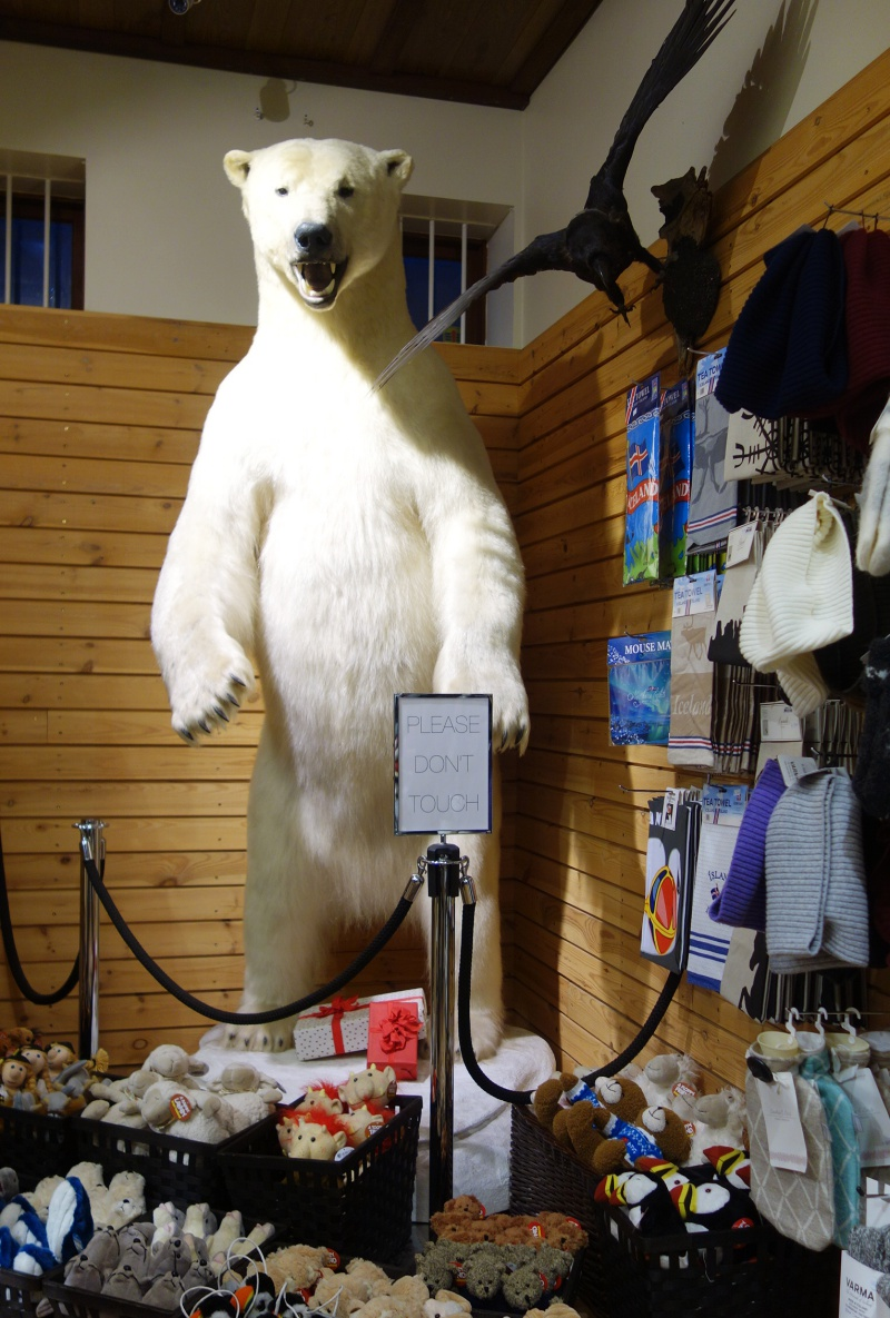 polar bear taxidermy