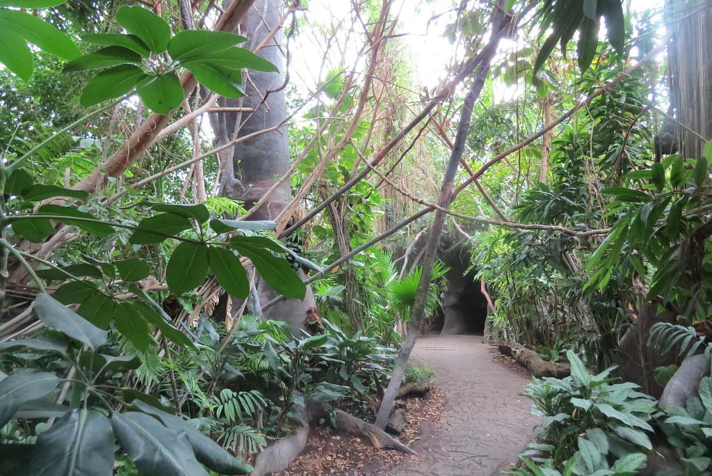 Еще один тропический павильон