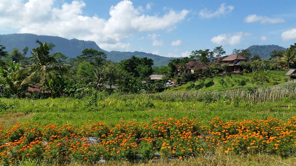 Sidemen wioska Bali