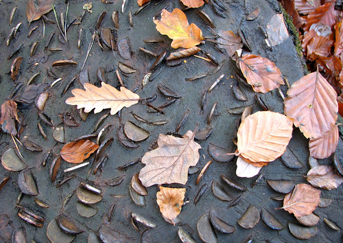 Coins & leaves