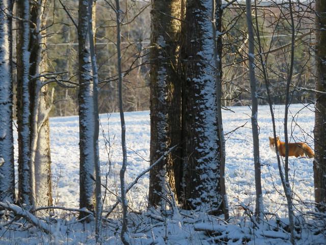 Loomad lumel