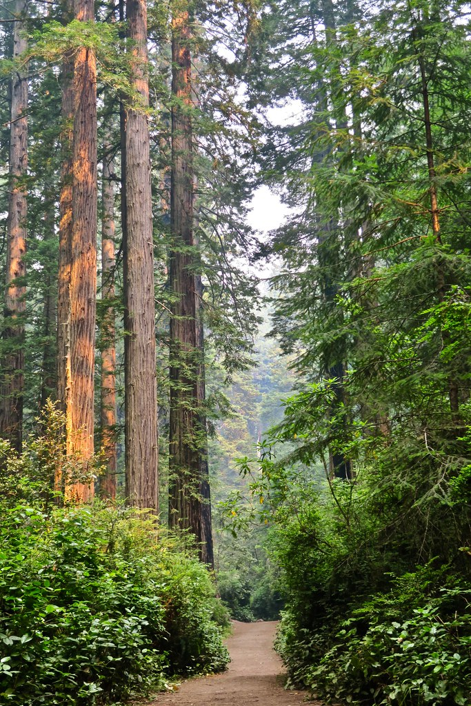 Redwood National Park, Orick, CA