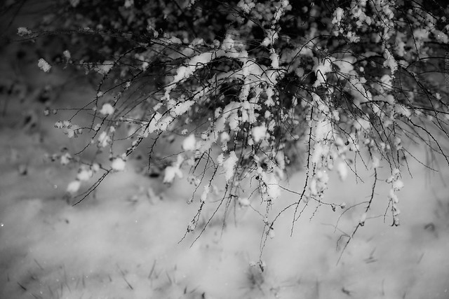 2018.11.27_331/365 - twigs & snow