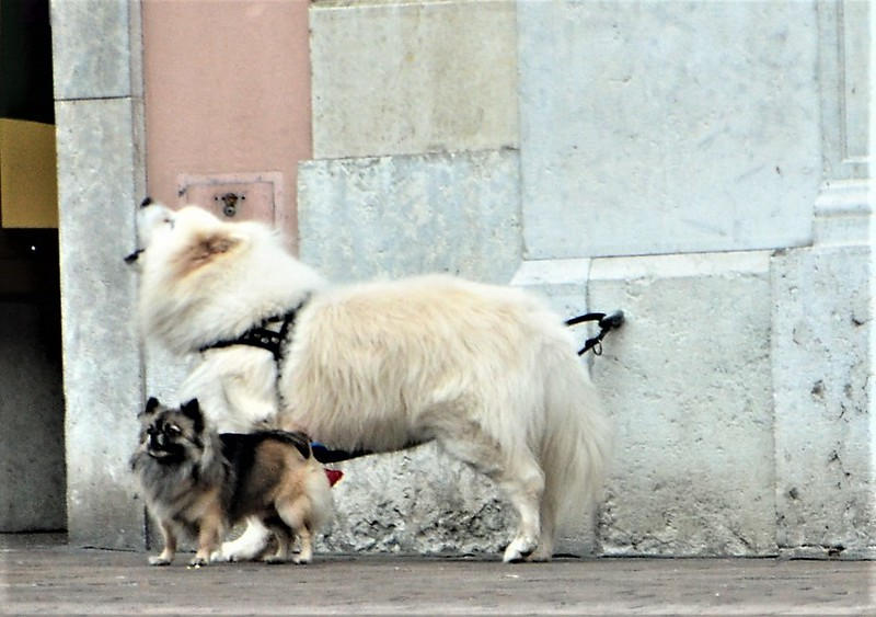 Dogs 28.11 (2)