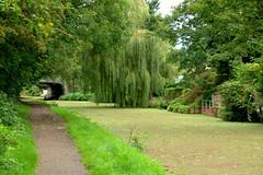 Green canal at Preston