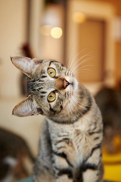 Do Cats Recognize Other Cats?