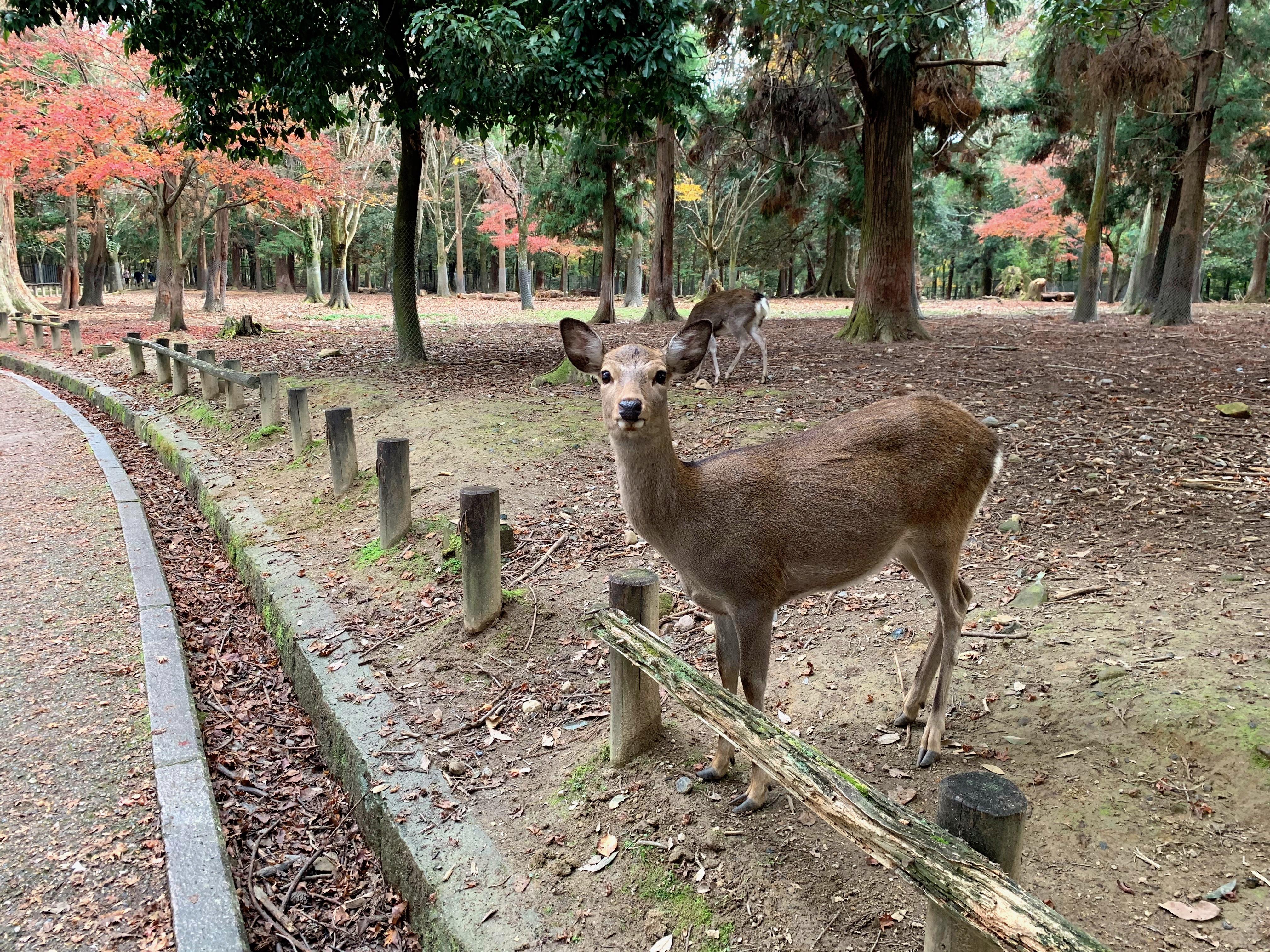 Nara, Japan 2018 321