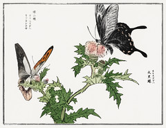 Butterfly and flower illustration from Churui Gafu (1910) by Mor