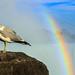 2017 Niagara Trip - The Bird and the Rainbow by JRB_EVO