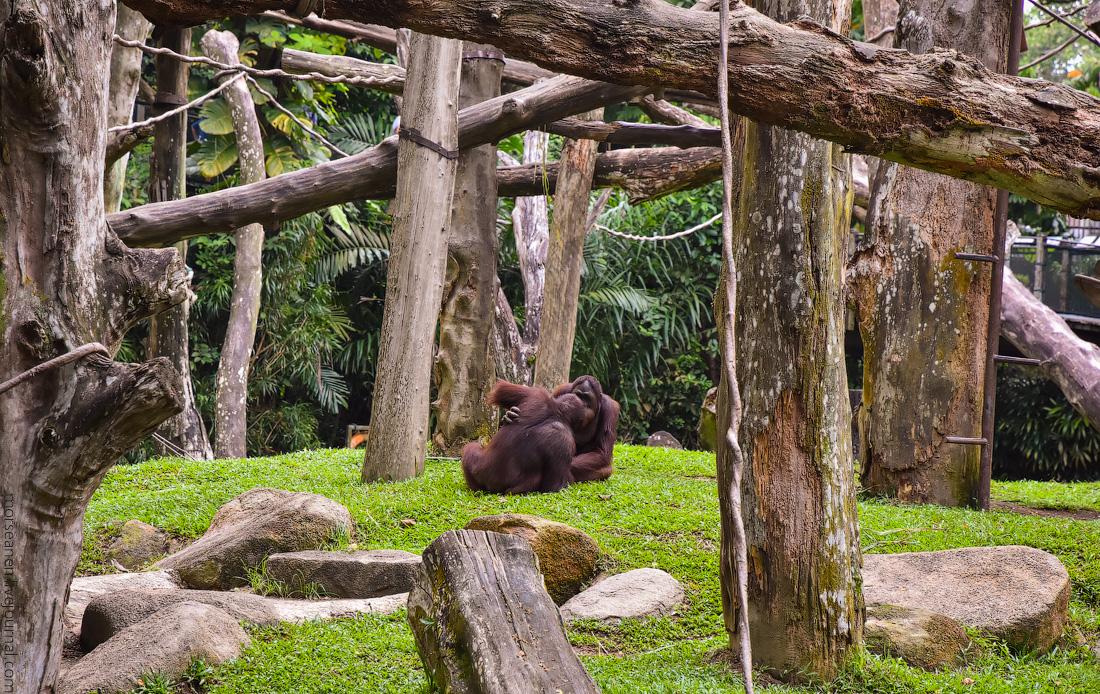 Singapore-zoo-(40)