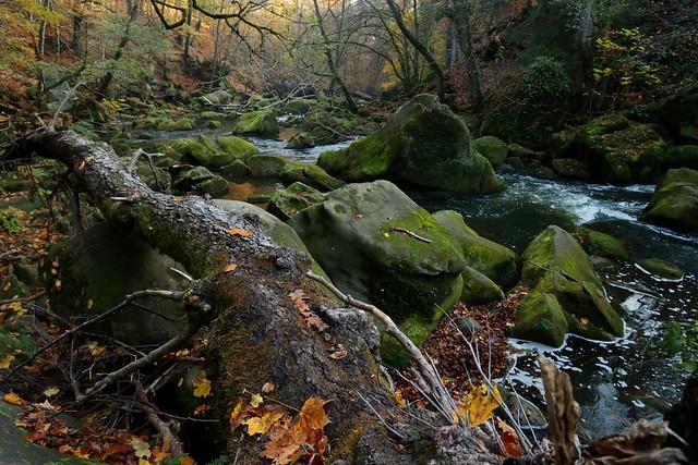 Magnifiques couleurs automnale au, Canon EOS 760D, Canon EF-S 10-22mm f/3.5-4.5 USM