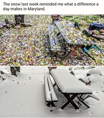The snow last week reminded me what a difference a day makes in Maryland.