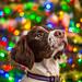 Wyatt's First Christmas by rlgidbiz1