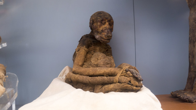 An ancient Monkey mummy at the Egyptian museum of Cairo