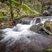 Padley Gorge, Grindleford, Derbyshire-3