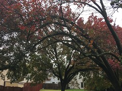 The Beginning of Fall Season.