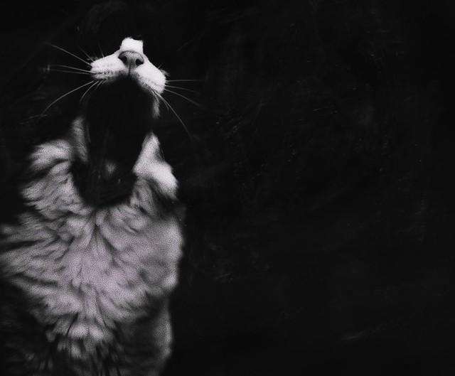 Black Cat Metal