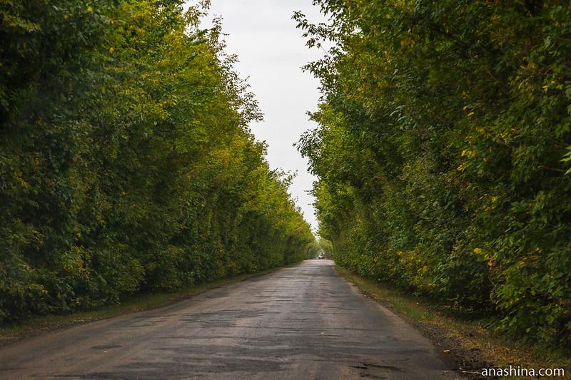 Зеленый коридор, Воронежская область