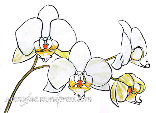 sketch of a white orchid spray