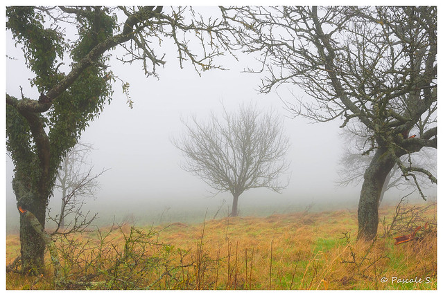 Encadré dans la brume