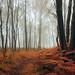 Barcode Autumn