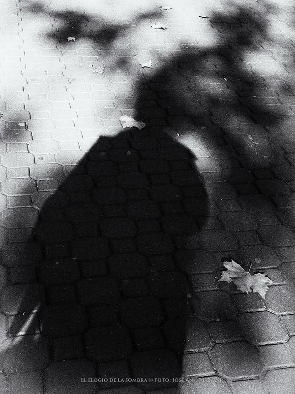 Sombra de una persona y ramas de un árbol en una acera con hojas caidas