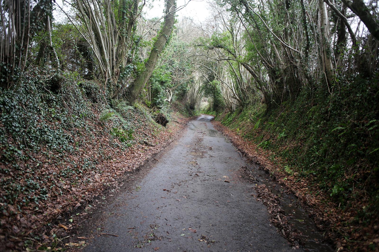 Road near Hawkley