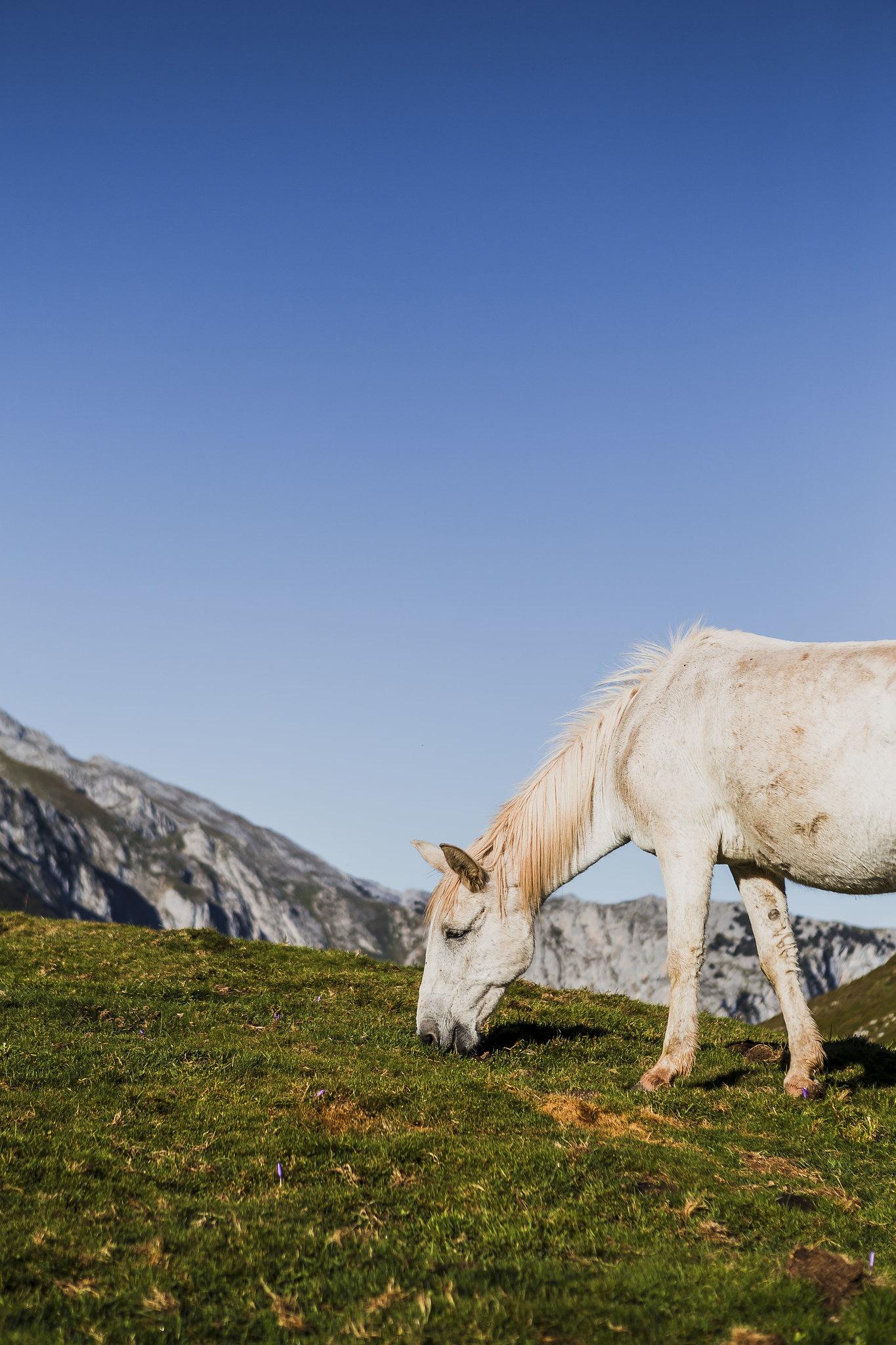El caballo blanco de Pandébano