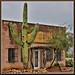 Saguaro_6239