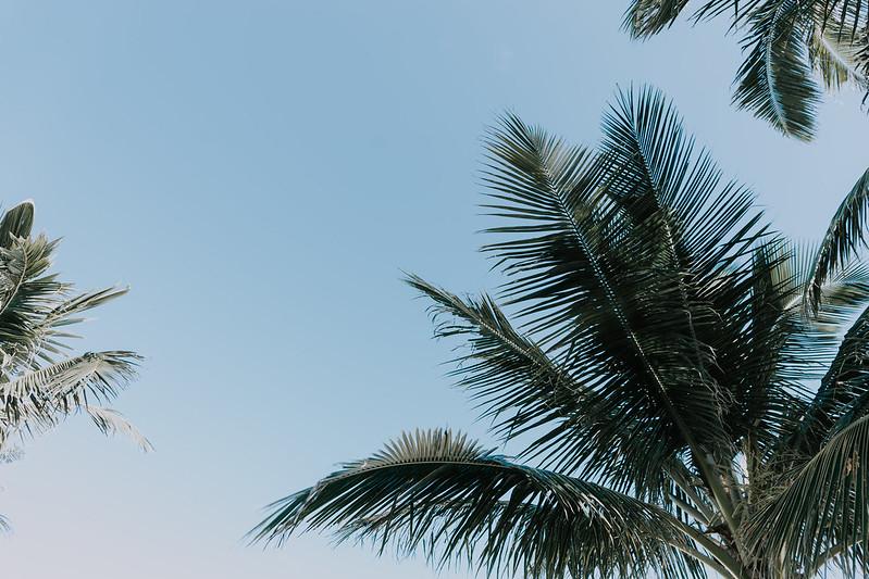 Oahu Travel Guide