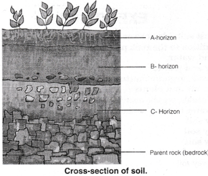 NCERT Solutions for Class 7 Science Chapter 9 Soil 3